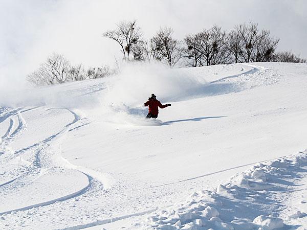 場 福井 和泉 スキー